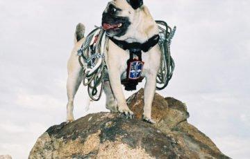 Topdog söker junior SEO som kan bestiga Google berget med oss